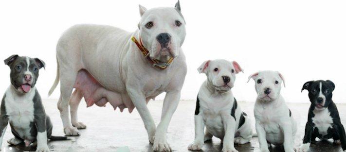 záchranná akce pitbula psů psa psi pes štěňata video o psech 3a