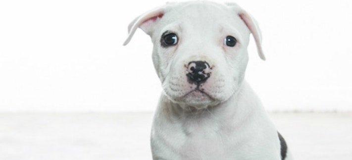 záchranná akce pitbula psů psa psi pes štěňata video o psech 5