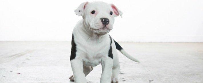 záchranná akce pitbula psů psa psi pes štěňata video o psech 7
