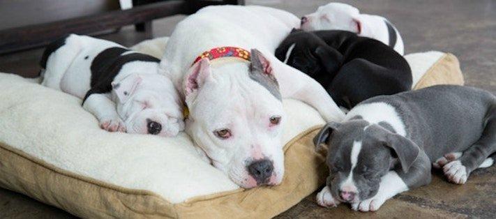 záchranná akce pitbula psů psa psi pes štěňata video o psech 8