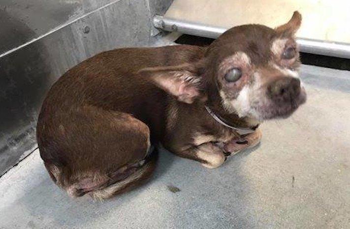 slepý pes v útulku péče o slepého hluchého psa adopce 1