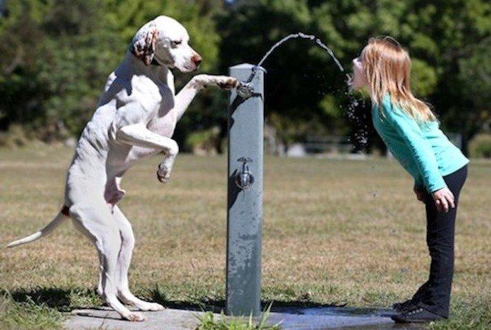 dítě a pes soužití chování empatie respeck výchova obrázky 7