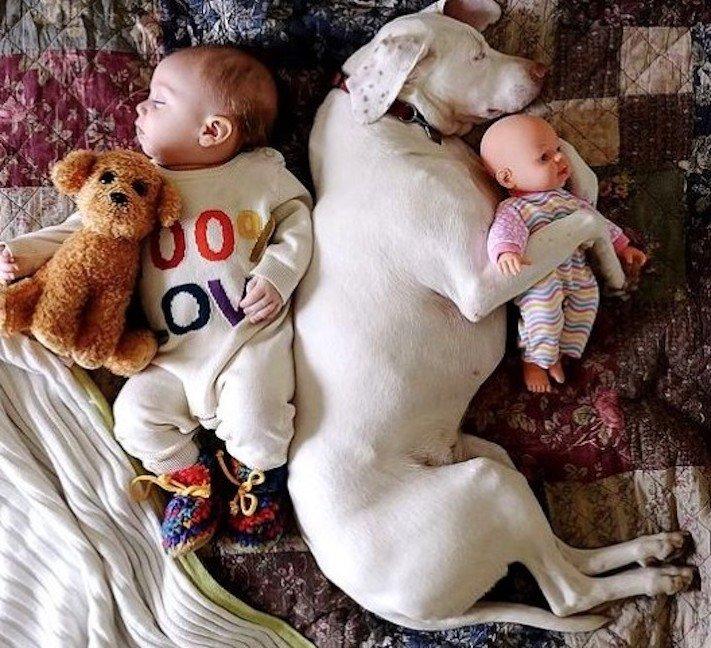 dítě a pes soužití chování empatie respeck výchova obrázky 9