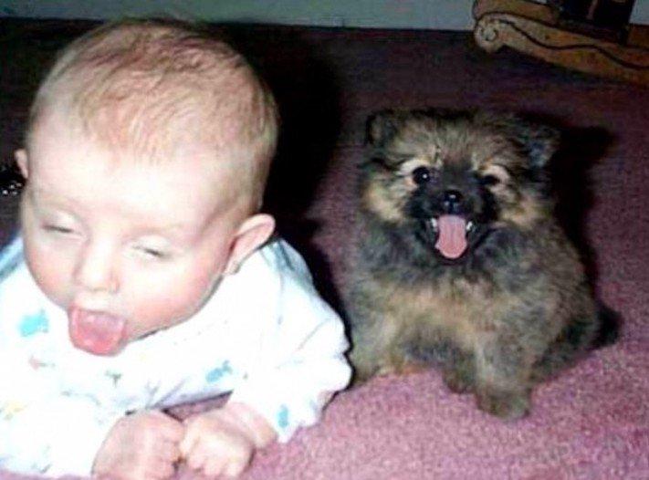 dítě a pes soužití chování empatie respeck výchova obrázky 14