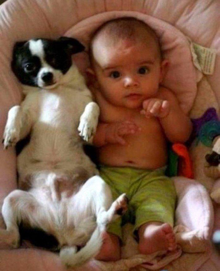 dítě a pes soužití chování empatie respeck výchova obrázky 15