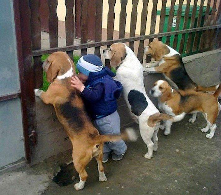 dítě a pes soužití chování empatie respeck výchova obrázky 18