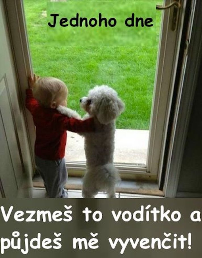 dítě a pes soužití chování empatie respeck výchova obrázky 19