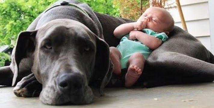 dítě a pes soužití chování empatie respeck výchova obrázky 20