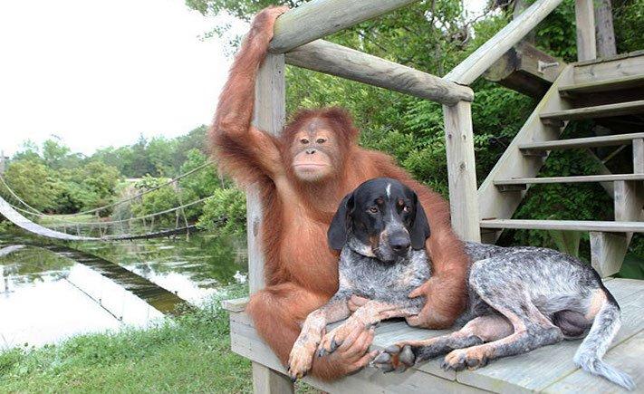 nejlepší přítel člověka pes obrázky 1