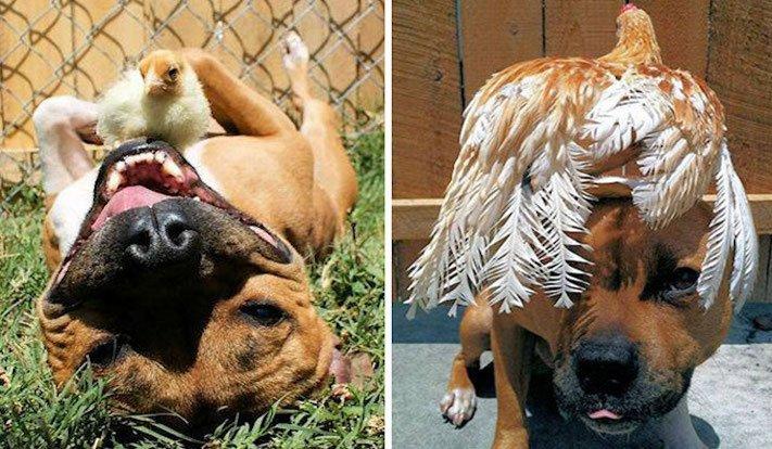 nejlepší přítel člověka pes obrázky 3