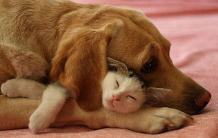 nejlepší přítel člověka pes obrázky 4