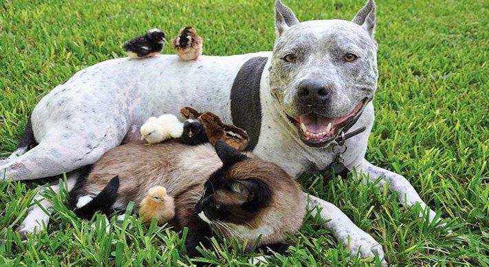 nejlepší přítel člověka pes obrázky 5