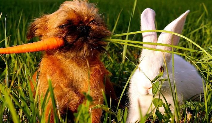 nejlepší přítel člověka pes obrázky 6