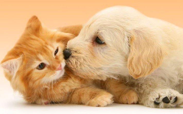 nejlepší přítel člověka pes obrázky 8