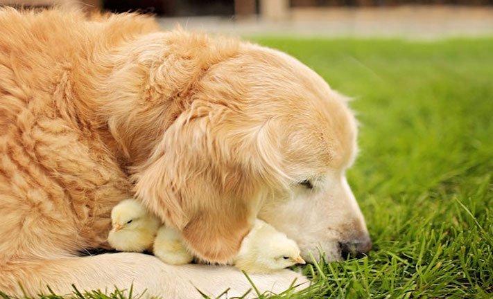 nejlepší přítel člověka pes obrázky 9