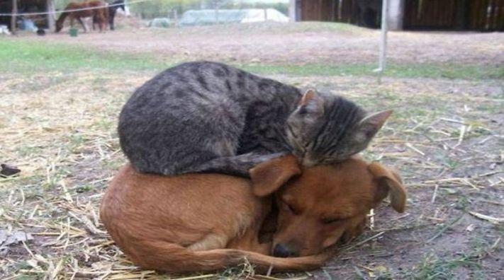 nejlepší přítel člověka pes obrázky 10