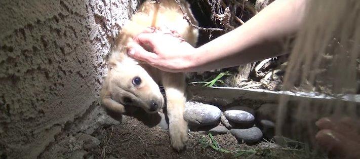 záchrana psů štěněte na ulici útulky adopce zvířat 2