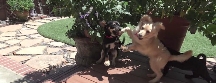 záchrana psů štěněte na ulici útulky adopce zvířat 6