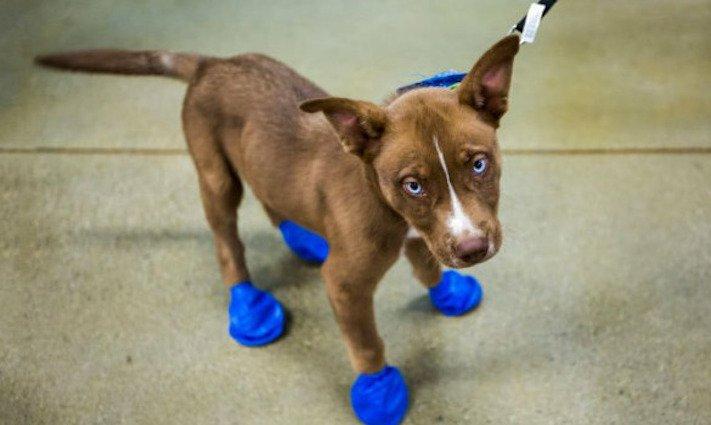 vysoká teplota vzduchu u psů pes a horko horké počasí rady tipy obrázky 3