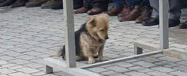 pes truchli na hrobu hrobě svého majitele pohřeb pes zesnulý páníček bez majitele 1