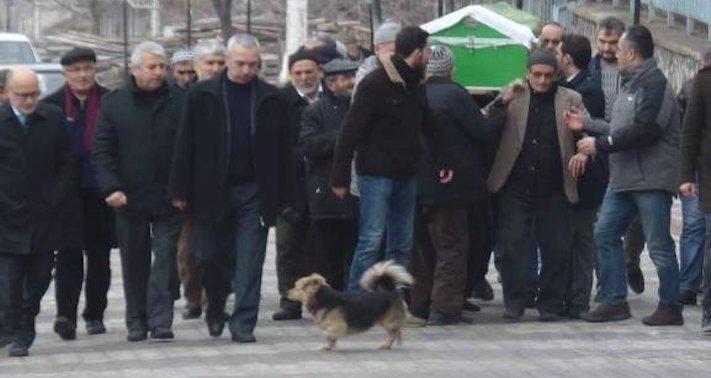 pes truchli na hrobu hrobě svého majitele pohřeb pes zesnulý páníček bez majitele 2