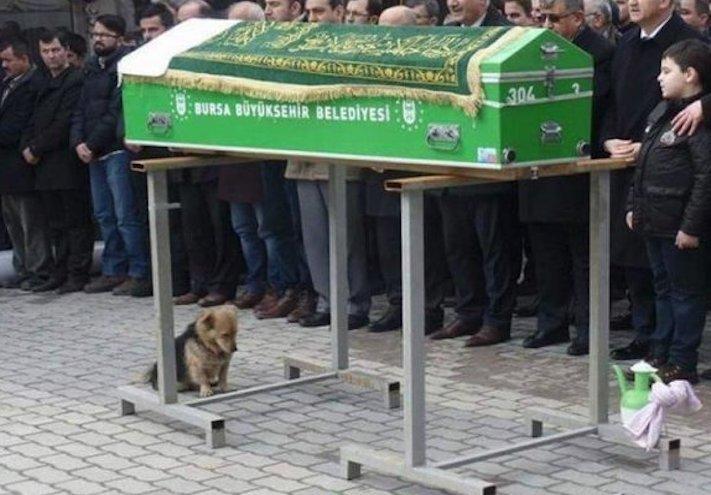 pes truchli na hrobu hrobě svého majitele pohřeb pes zesnulý páníček bez majitele 3