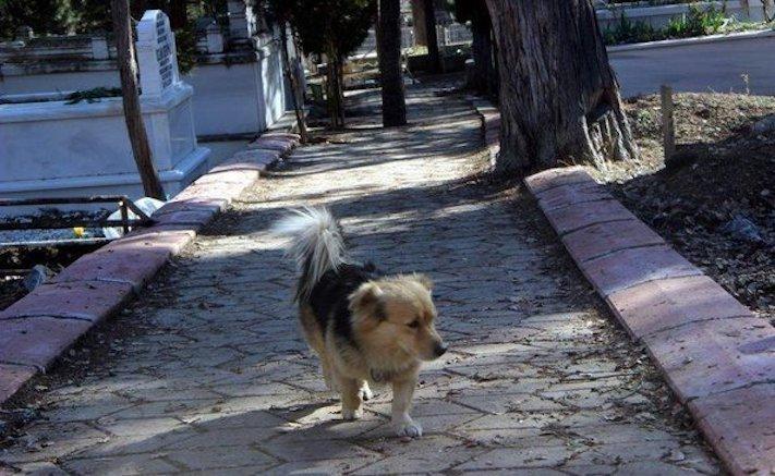 pes truchli na hrobu hrobě svého majitele pohřeb pes zesnulý páníček bez majitele 4