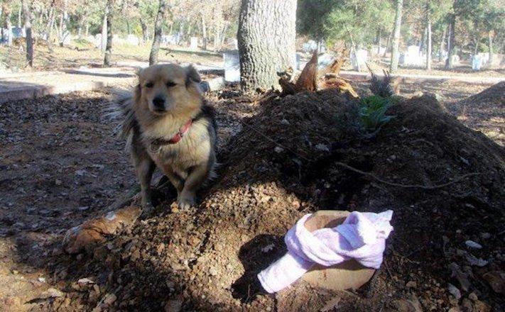pes truchli na hrobu hrobě svého majitele pohřeb pes zesnulý páníček bez majitele 5