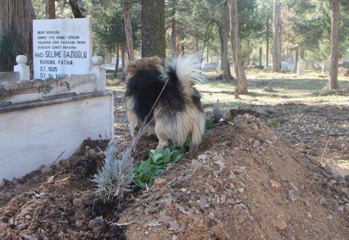 pes truchli na hrobu hrobě svého majitele pohřeb pes zesnulý páníček bez majitele 6