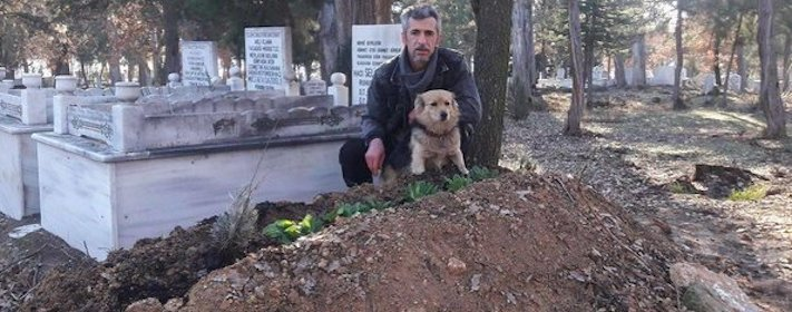 pes truchli na hrobu hrobě svého majitele pohřeb pes zesnulý páníček bez majitele 7