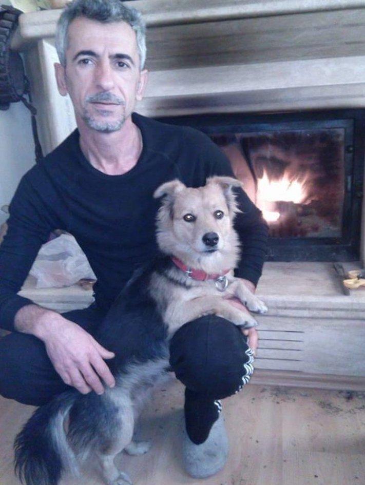 pes truchli na hrobu hrobě svého majitele pohřeb pes zesnulý páníček bez majitele 8