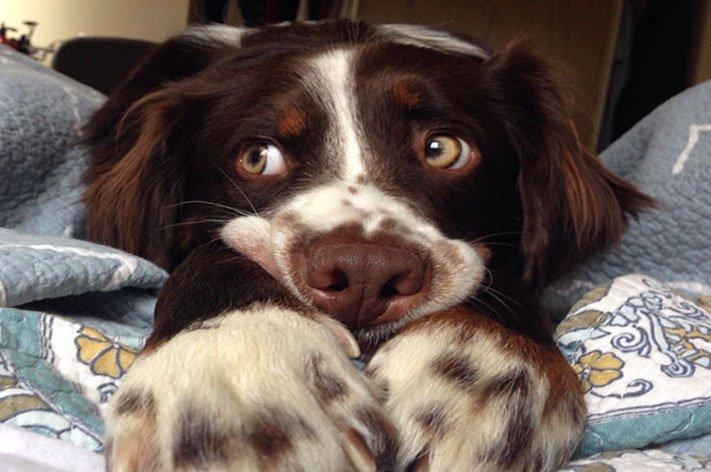 psí zábavné vtipné obrázky psů nejlepší fotografie po probuzení postel 1