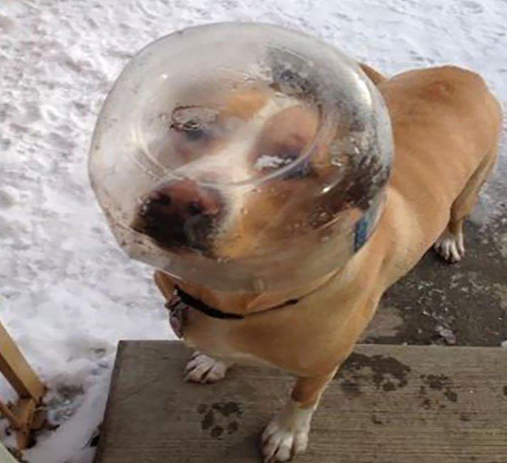 psí zábavné vtipné obrázky psů nejlepší fotografie po probuzení postel 6