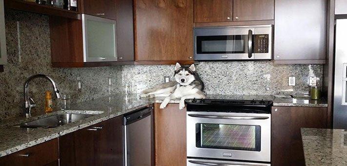 psí zábavné vtipné obrázky psů nejlepší fotografie po probuzení postel 8