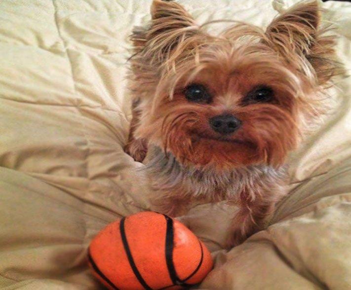 psí zábavné vtipné obrázky psů nejlepší fotografie po probuzení postel 9