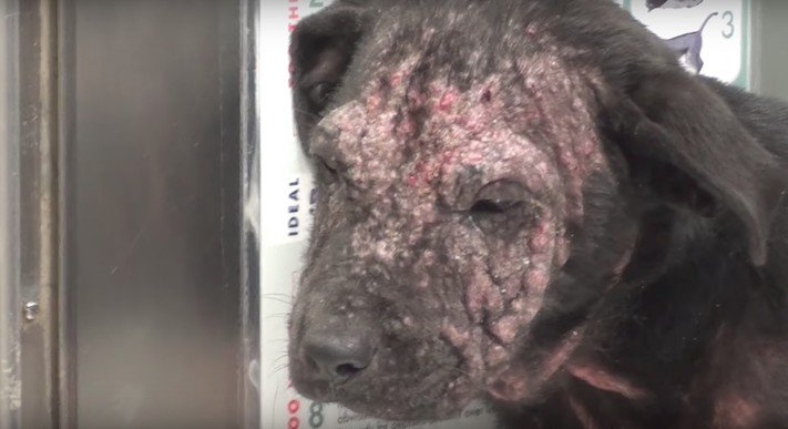 záchrana štěněte německé dogy labradora prašivina příběhy o psech