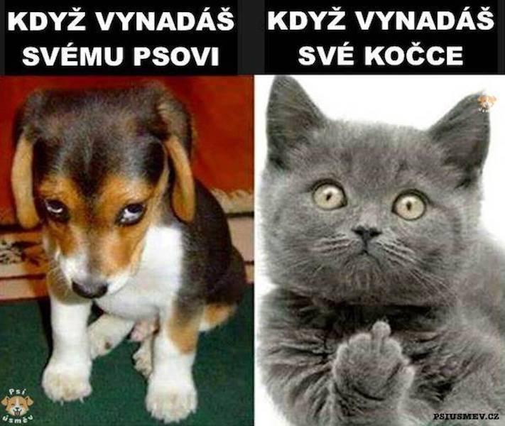 Pes se chová jako kočka vtipné srandovní zábavné obrázky psů štěňat s kočkami