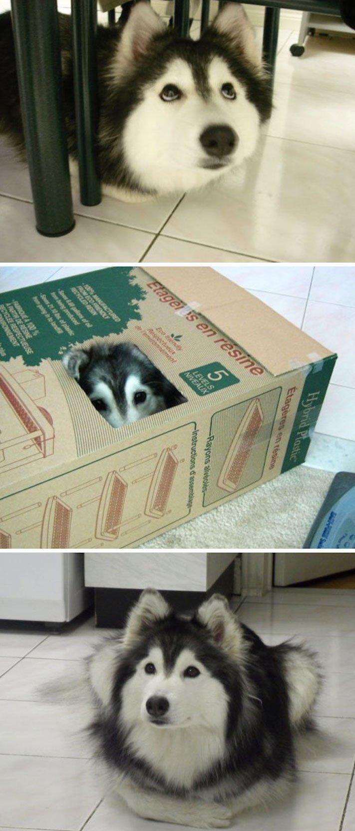 Pes se chová jako kočka vtipné srandovní zábavné obrázky psů štěňat s kočkami 2