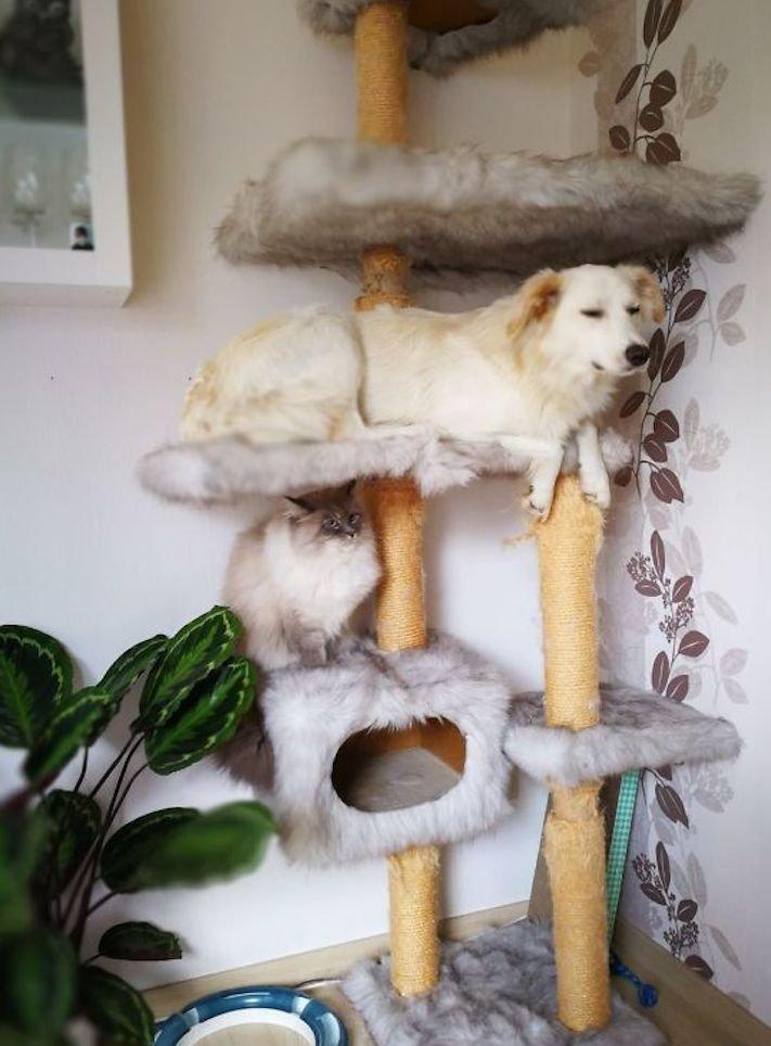 Pes se chová jako kočka vtipné srandovní zábavné obrázky psů štěňat s kočkami 5