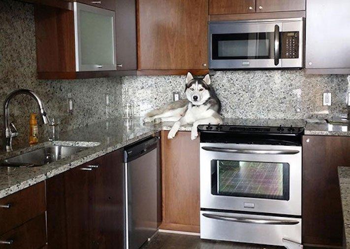 Pes se chová jako kočka vtipné srandovní zábavné obrázky psů štěňat s kočkami 9