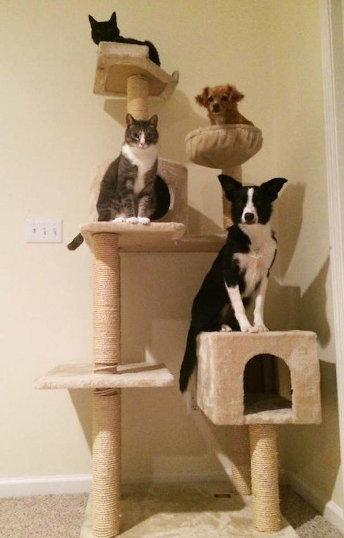 Pes se chová jako kočka vtipné srandovní zábavné obrázky psů štěňat s kočkami 12