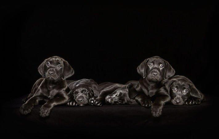 adopce černých psů z útulky problémy u černého psa barva srsti štěňata v útulcích 1
