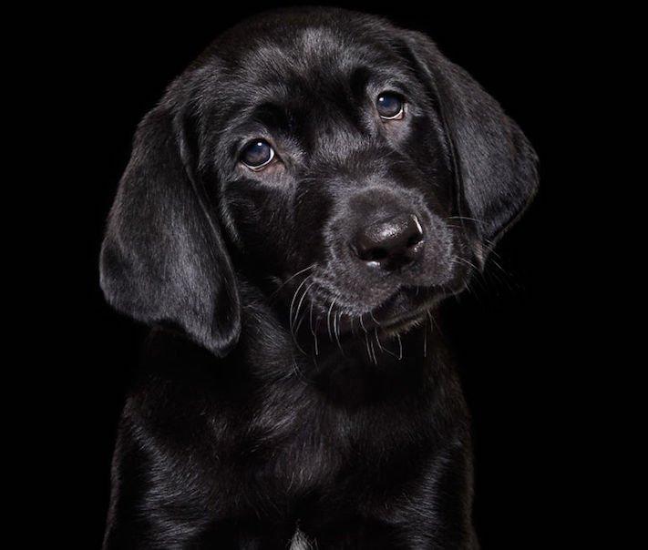 adopce černých psů z útulky problémy u černého psa barva srsti štěňata v útulcích 2