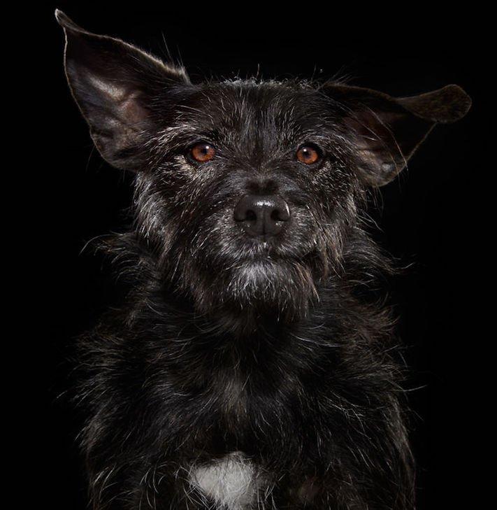adopce černých psů z útulky problémy u černého psa barva srsti štěňata v útulcích 3