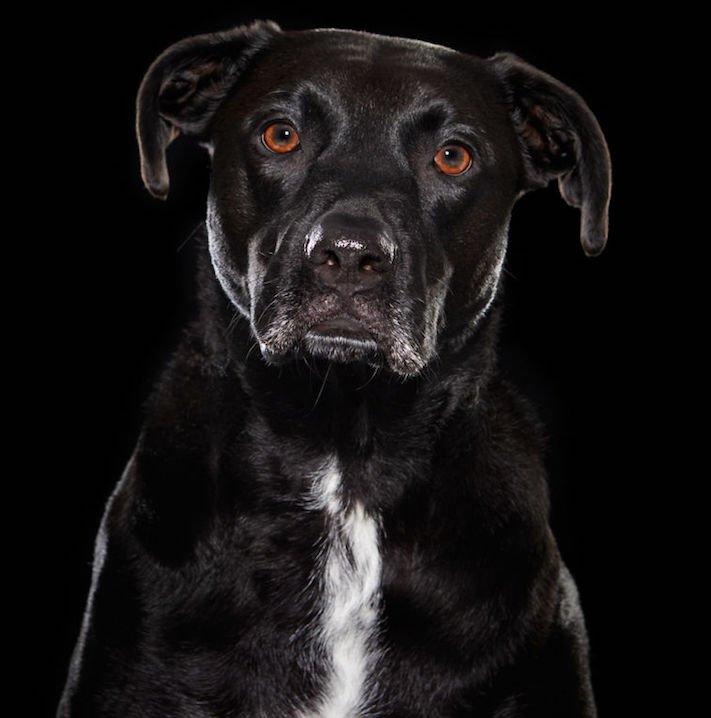 adopce černých psů z útulky problémy u černého psa barva srsti štěňata v útulcích 4