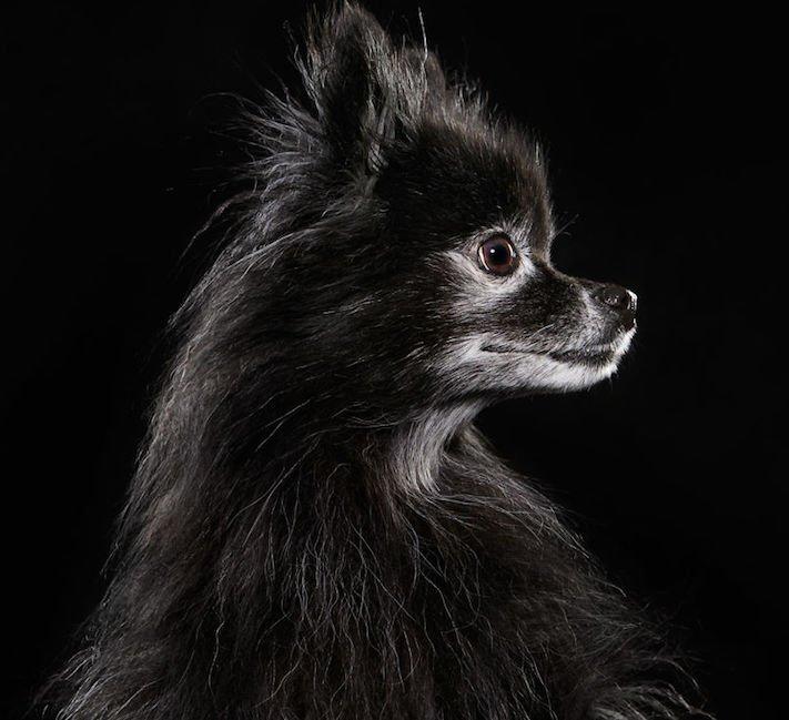 adopce černých psů z útulky problémy u černého psa barva srsti štěňata v útulcích 5