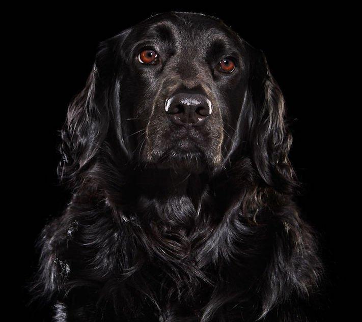 adopce černých psů z útulky problémy u černého psa barva srsti štěňata v útulcích 6