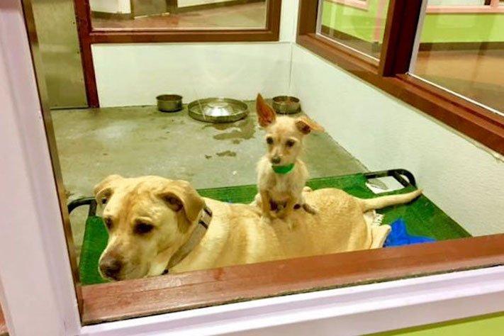 pes a fenka přátelství bonnie a clyde pes na zádech hřbetě hřbetu jiného psa nerozdělitlní přátelé v útulku 1