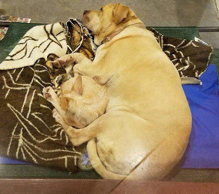 pes a fenka přátelství bonnie a clyde pes na zádech hřbetě hřbetu jiného psa nerozdělitlní přátelé v útulku 6