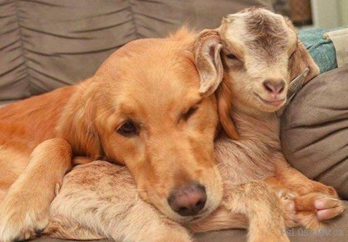 štěňata psi adoptují jiná zvířata nejlepší roztomilé obrázky psů starajících se o jiná mláďata zvířat 5